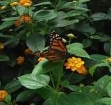 Watch Video at Butterfly Wonderland in Arizona